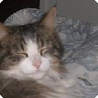Adopt A Pet :: Patches - Stafford, VA