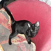 Adopt A Pet :: Salem - Pensacola, FL