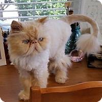 Adopt A Pet :: Elton - Davis, CA