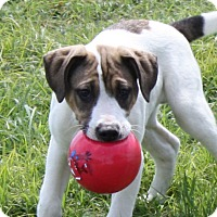 Adopt A Pet :: Kip - PENDING - in Maine - kennebunkport, ME