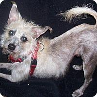 Adopt A Pet :: Mojo - Jacksonville, FL