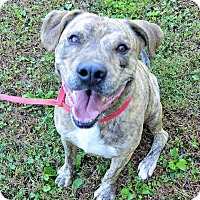 Adopt A Pet :: Brix - Norfolk, VA
