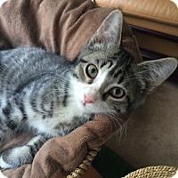 Adopt A Pet :: Keepurr - Monroe, GA