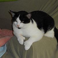Adopt A Pet :: Opal - Bonita Springs, FL