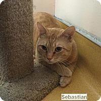 Adopt A Pet :: Sebastian - Hudson, NY