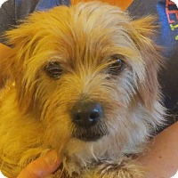 Adopt A Pet :: Melvin - Allentown, PA