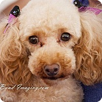 Adopt A Pet :: Chanel - Courtice, ON