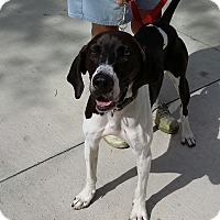 Coonhound (Unknown Type)/Hound (Unknown Type) Mix Dog for adoption in Port Clinton, Ohio - Jake