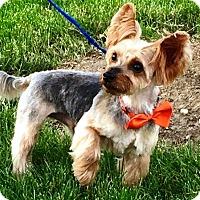 Adopt A Pet :: Hudson - Oswego, IL
