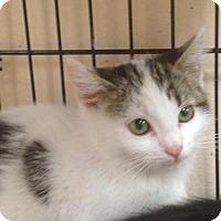Adopt A Pet :: Meadow - East Brunswick, NJ