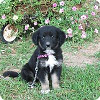 Adopt A Pet :: MORGAN - Bedminster, NJ