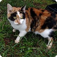 Adopt A Pet :: Lorelei - Carthage, NC