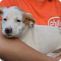 Adopt A Pet :: Winken - Bayshore, NY