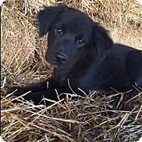Adopt A Pet :: Slater - Bedminster, NJ