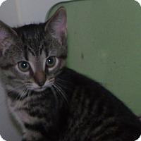 Adopt A Pet :: myrrh - Muskegon, MI