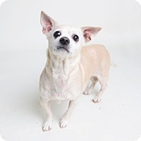 Adopt A Pet :: Adrienne - Wilmington, DE
