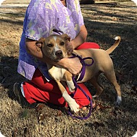 Adopt A Pet :: Cher - Harrisonburg, VA