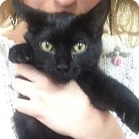 Adopt A Pet :: Delilah - St. Louis, MO