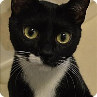 Adopt A Pet :: Mae - Sherwood, OR