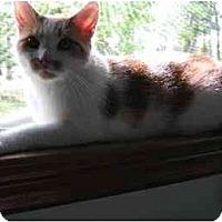 Adopt A Pet :: Casandra - Phillipsburg, NJ