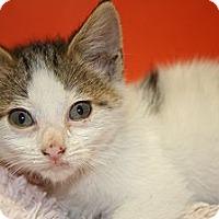 Adopt A Pet :: REAGAN - SILVER SPRING, MD