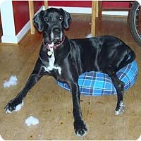 Adopt A Pet :: Titan - Hanover, MD
