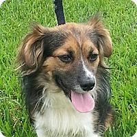 Adopt A Pet :: Jackson - Brattleboro, VT