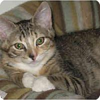 Adopt A Pet :: Lana - Portland, ME
