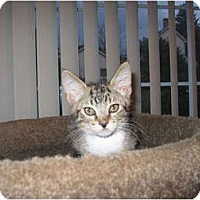 Adopt A Pet :: JoJo - Catasauqua, PA