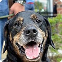 Adopt A Pet :: **Ronald** - Rockaway, NJ