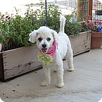 Adopt A Pet :: **HEATHER** - Stockton, CA