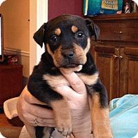 Adopt A Pet :: Snickers - Marietta, GA