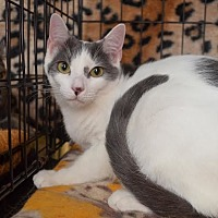Adopt A Pet :: Jamie - Greer, SC