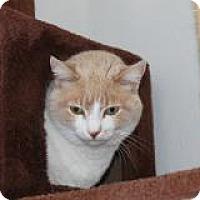 Adopt A Pet :: Lucy O. - El Cajon, CA