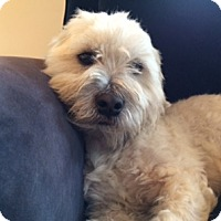 Adopt A Pet :: Fritz - Walnut Creek, CA