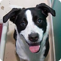 Adopt A Pet :: Luke - Allen, TX