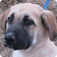 Adopt A Pet :: Reba - Bedminster, NJ