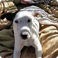 Adopt A Pet :: Romeo - West Hartford, CT