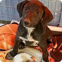 Adopt A Pet :: LILY - Gustine, CA