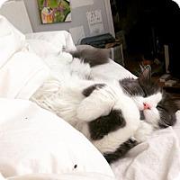 Adopt A Pet :: Fluffy Billie! - Brooklyn, NY