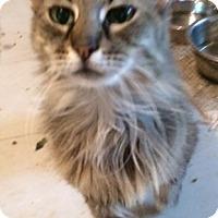 Adopt A Pet :: Jossalin - Cocoa, FL
