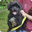 Adopt A Pet :: Memo