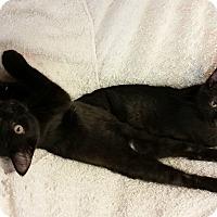 Adopt A Pet :: Yen - Chippewa Falls, WI