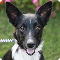 Adopt A Pet :: Brennan - Nanuet, NY