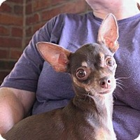 Adopt A Pet :: Chula - Los Banos, CA