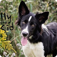 Adopt A Pet :: Billy the Kid - Joliet, IL