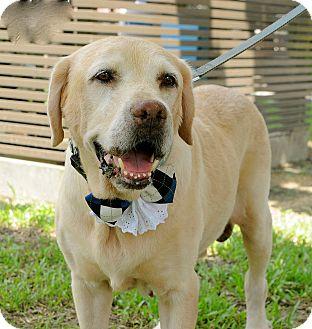 Labrador Retriever Mix Dog for adoption in Surrey, British Columbia - Larry