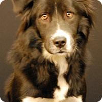Adopt A Pet :: Rebel - Newland, NC
