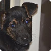 Adopt A Pet :: Marie - Sudbury, MA
