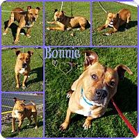 Adopt A Pet :: Bonnie - Joliet, IL